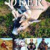 Kodiak Alaska Deer